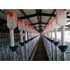 河北自动化养猪设备生产定制/开元畜牧发货速度量大优惠