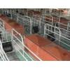 甘肃小猪保育床「旺农畜牧设备」复合板保育床多少钱